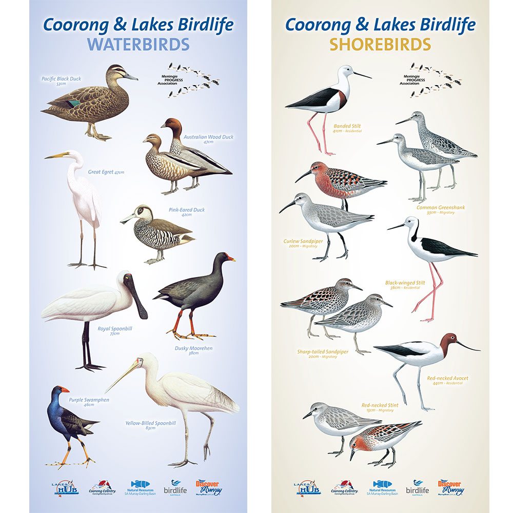 Birds of the Coorong Pull Up Banners